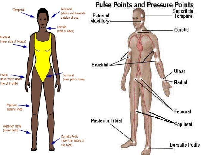 Assessing the Pulse - RNpedia