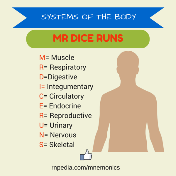 Systems of the Body