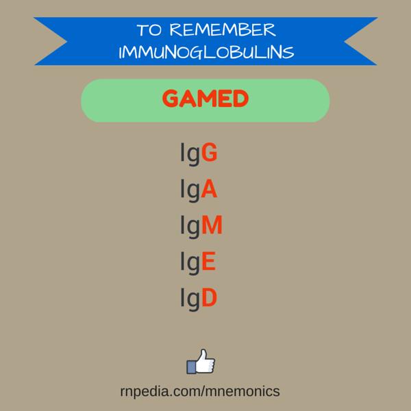 To Remember Immunoglobulins